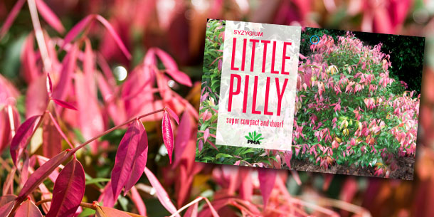 bgn-blog-little-pilly-header (2)